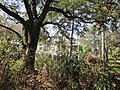 Magnolia Lane Plantation House 4.JPG