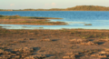 Malagasy plover breeding habitat.png
