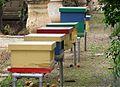 Maltese honey (3044867663).jpg
