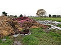 Manure heap in Tunstead, Norfolk, England.jpg