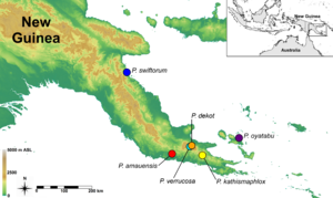 Papuan Peninsula - Image: Map of Paedophryne localities 2