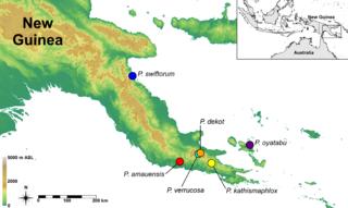 Papuan Peninsula Southeastern end of Island of New Guinea