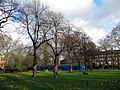 Maple trees in Bethnal Green Gardens - geograph.org.uk - 1597343.jpg