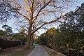 Marrickville NSW 2204, Australia - panoramio (86).jpg