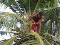 Marshall Islands PICT0461 (4744748889).jpg