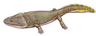 Carnian - Metoposaurus