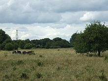 Middle Heath, Castor Hanglands - geograph.org.uk - 1387135.jpg