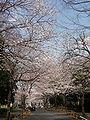 Midorigaoka 06a6377sv.jpg
