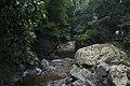 Minnamurra Rainforest - panoramio (10).jpg
