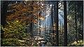 Mist - panoramio (9).jpg