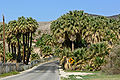 Moapa Valley Warm Springs Road.jpg