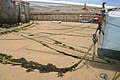 Mooring Ropes on Town Beach - geograph.org.uk - 817580.jpg