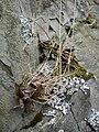 Moss (1642872903).jpg