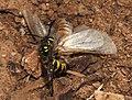 Moth September 2008-6.jpg