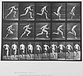 Muybridge runner.jpg
