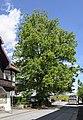 ND 101 18 Winterlinde Hungerburg-Ibk 20140508 GOG 9165.jpg