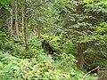 NPR Suchý, les.jpg
