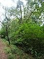 Nairobi Arboretum Park 23.JPG