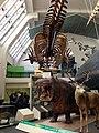 Natural History Museum 2014.jpg