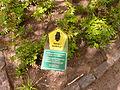 Naturdenkmal 3-1, Eiche vor Glaserei Wohler, Bild 1.JPG
