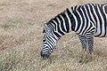 Nature of Ngorongoro Conservation Area (24).jpg