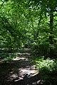 Naturschutzgebiet Haseder Busch - Im Haseder Busch (6).jpg