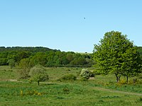 Naturschutzgebiet Kleine Lummersbach bei Cyriaxweimar Mai 5.JPG