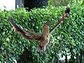 Nesting Time (18450456944).jpg