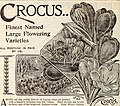 New floral guide - autumn 1899 (1899) (14802971103).jpg