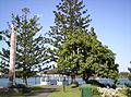 Newstead Park monument-and-Brisbane-River.jpg