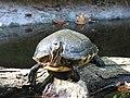 North Carolina Zoo (8981127132).jpg