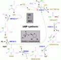 Nucleotides syn2.png