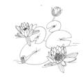 Nymphaea alba ellywa.png