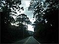 O Pinheiro-do-Paraná ou Araucária (Araucaria angustifolia) é visto em quase toda a extenção da Av. Pedro Paulo. - panoramio.jpg