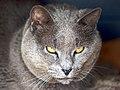 O gato tomé (2308426366).jpg