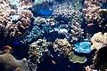 Oceanário de lisboa (8323324962).jpg