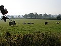 Offwell, Grazing Land near Colyton Cross 2007 - geograph.org.uk - 675185.jpg