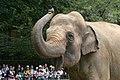 Oji zoo, Kobe, Japan (2820438477).jpg