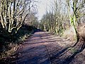 Old Branch Line - geograph.org.uk - 320551.jpg