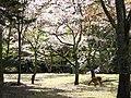 Omoto Park.jpg