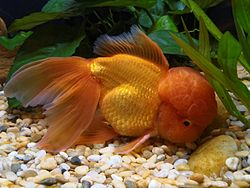 How Do Fish Lay Eggs  Cuteness