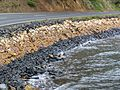 Otago Harbour Walls1.JPG