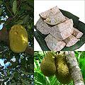 Owoce Drzewo bochenkowe.jpg