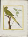 Palaeornis docilis - 1700-1880 - Print - Iconographia Zoologica - Special Collections University of Amsterdam - UBA01 IZ18500041.tif