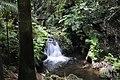 Palm Jungle Falls - panoramio.jpg
