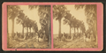 Palmetto Avenue, Fort George, Fla. (No. 13), from Robert N. Dennis collection of stereoscopic views.png