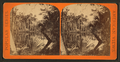 Palmetto Hammock, from Robert N. Dennis collection of stereoscopic views.png