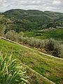Panorama Montefioralle n01.jpg