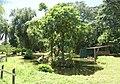 Paramaribo Zoo 20160926 kwatta-apeneiland.jpg
