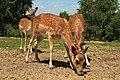 """Parcul de Animale - """"Moara de Vant"""" (7442557368).jpg"""